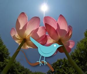 lotus-twitter