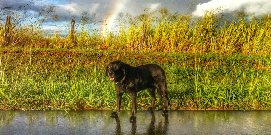 Lexi under the rainbow