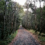 The irresistible lure of an empty path in the woodlands