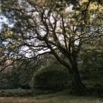 Trees at Glendalough